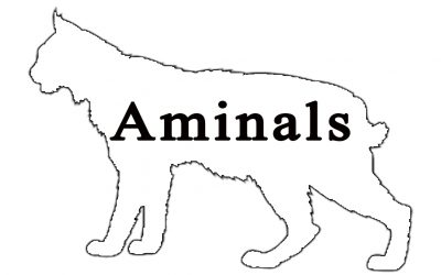 Aminals | Cleveland Metroparks Zoo