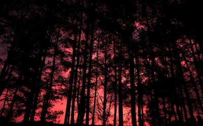 When the Woods Get Dark