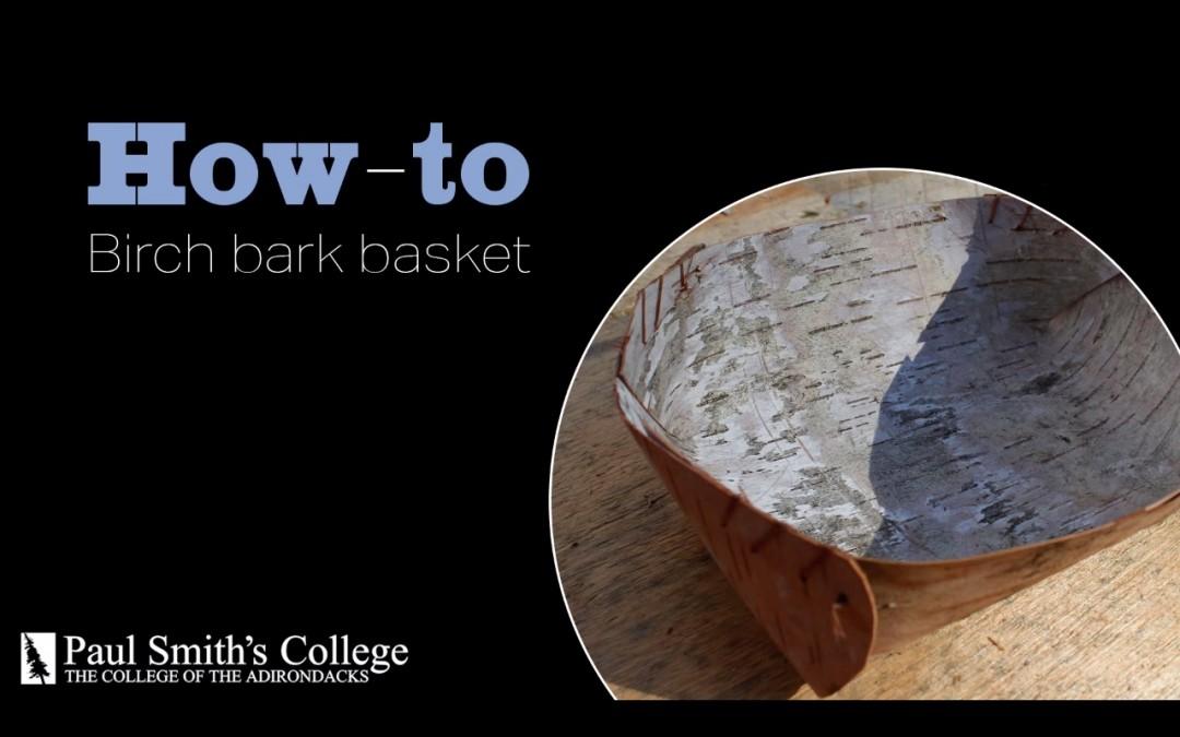 Bark video
