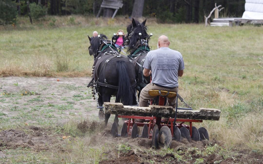 Photo Gallery: Rural Skills & Homesteading Festival