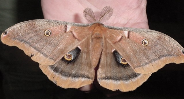 Project Silkmoth | Paul Smith's College